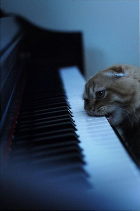 Cat Biting Piano Out Of Frustration